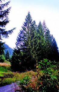 vanocni strom(1999)