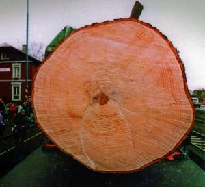 strom3-panel